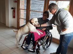 Education chiens médiateurs